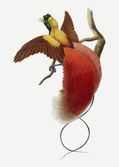 Red bird of paradise vector animal art print, remixed from artworks by john gould and william matthew hart