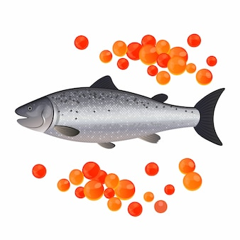 Red caviar and salmon isolated