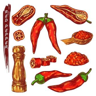 赤唐辛子またはカイエンペッパーのスケッチアイコン。新鮮または乾燥した唐辛子のさや、スライスまたは挽いた種子