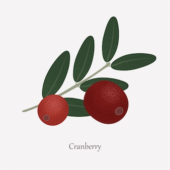 Red cranberries are an edible plant and green leaves.