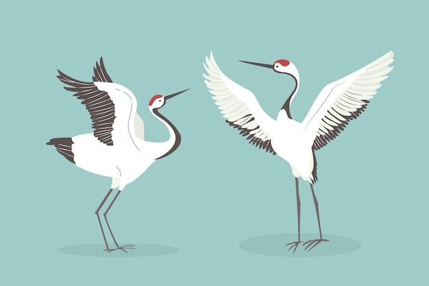 Red crowned crane flaps wings. mating dance of two japanese crane, asian wildlife