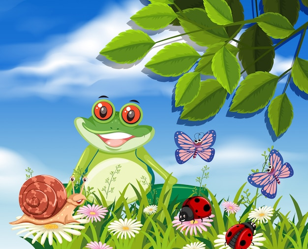 Red eyed tree frog in nature