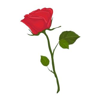 화이트에 빨간 꽃