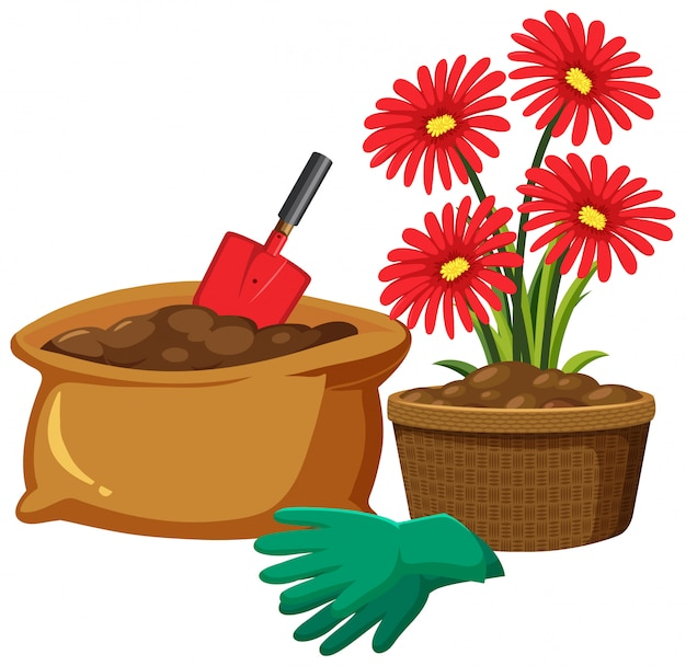 Red flowers in clay pot on white background