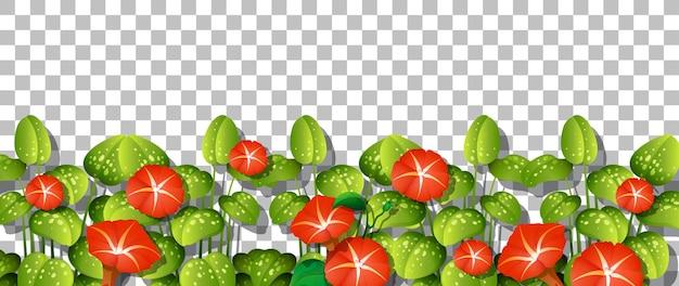 투명한 배경에 잎이 있는 붉은 꽃