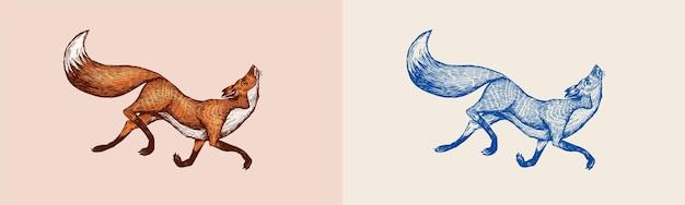 赤狐バッジ森生姜野生動物ベクトル刻まれた手描きヴィンテージ古いスケッチスタンプ