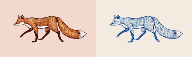 ふわふわの尾の森の動物または生姜獣のベクトルが刻まれた手描きのビンテージスケッチと赤狐