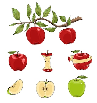 Red and green apples set hand drawn vector