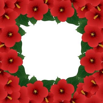 빨간 히 비 스커 스 꽃-샤론 테두리의 장미