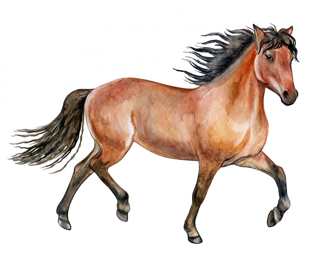 Red horse in watercolor