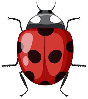 白い背景で隔離の赤いてんとう虫