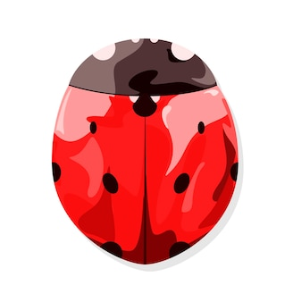 Red ladybug on a white background