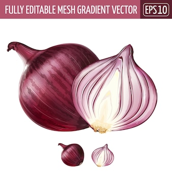 Red onion illustration on white