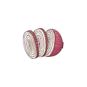 링으로 슬라이스 붉은 양파-흰색 표면에 고립 된 만화 야채 그리기