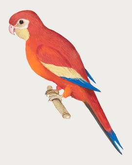 Red parrot in vintage style