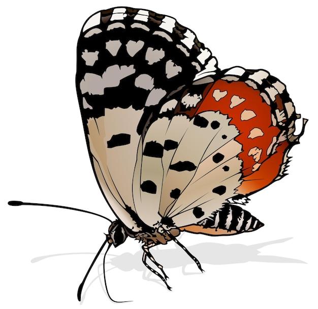 Красная бабочка пьеро talicada nyseus