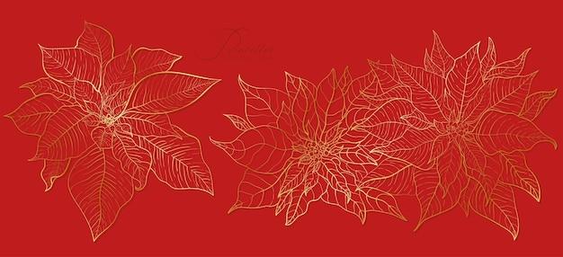 エレガントな金色のラインの赤いポインセチアの花序。クリスマスと年末年始の装飾のための要素。