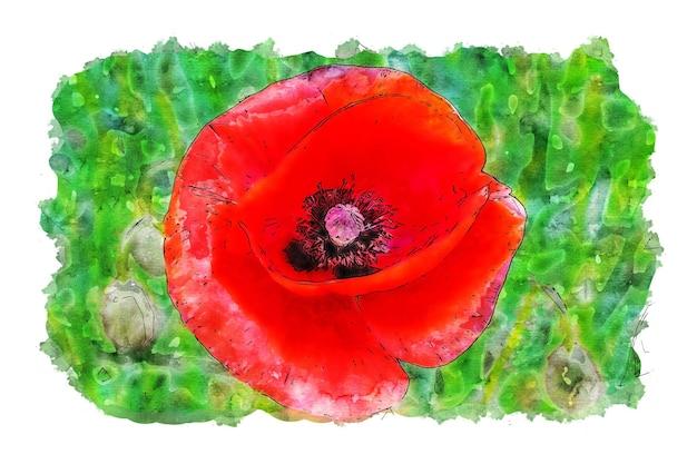 빨간 양귀비 꽃 수채화