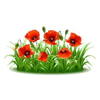 Красные маки в траве. иллюстрация