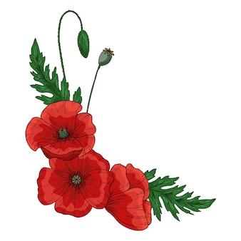 赤いポピーの花。 papaver。緑の茎と葉。