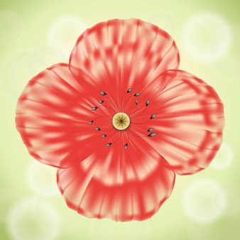 Red poppy flower with transparent petals on green background