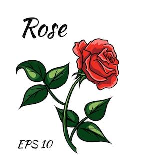 Красная роза мультяшном стиле на белом фоне. красная роза на стебле