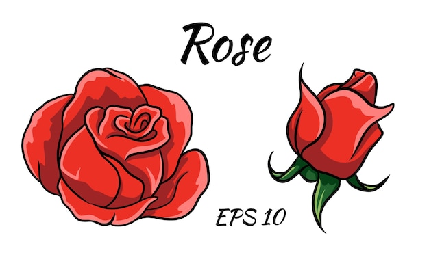 Red rose cartoon style on a white background. red rose bud.