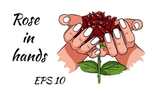 Красная роза в женских руках. романтичный. изолированный рисунок на белом фоне.