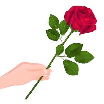 Красная роза в руке