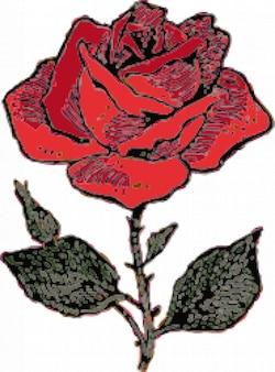 Red rose sketch