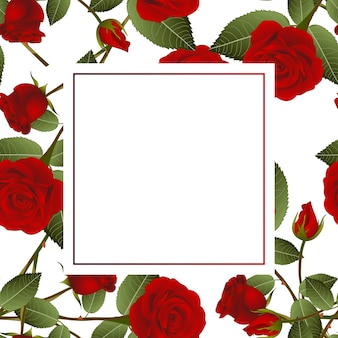 Red rose on white banner card