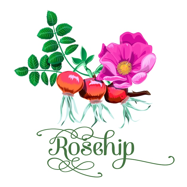 Red rosehip berry flat icon
