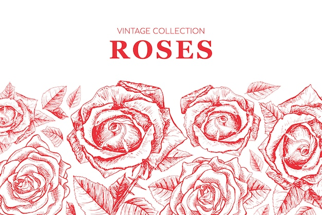 Red roses contour illustration