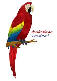 Red scarlet macaw bird