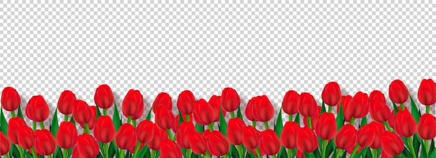 Red tulip flowers decorated transparent background