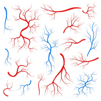 Red veins, human vessel, health arteries.