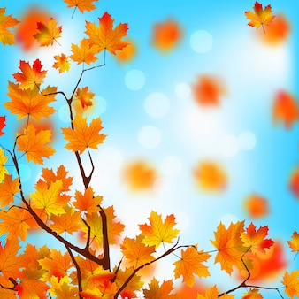 Red and yellow leaves against blue sky.