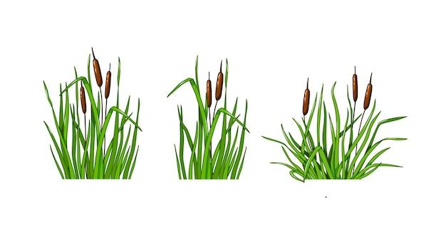 葦草は、白い孤立した背景に設定します。漫画のスタイルのベクトルイラスト。