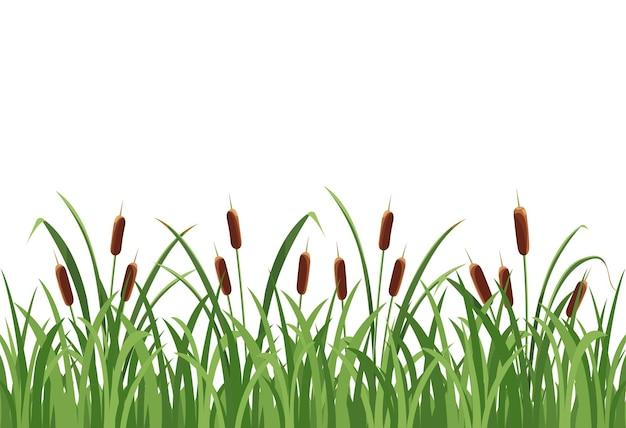 葦のメイス、白い背景の草の葦。ベクトル、野生の植生のシームレスなパターン。