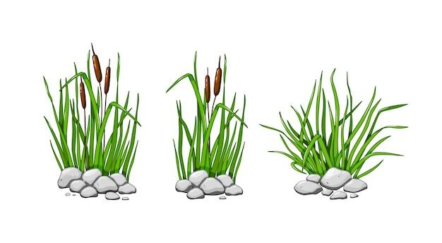 石には葦や草が生えています。緑の草のセットは、白い背景で隔離されます。ベクトルイラスト。