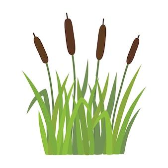 草の中の葦