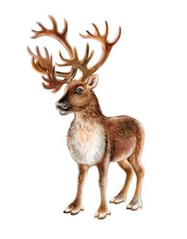 Северный олень, изолированные на белом фоне. олень с рогами. иллюстрация. акварель. шаблон.