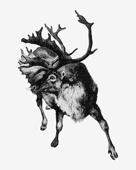 Reindeer vintage style