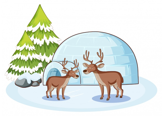 Reindeers and igloo in winter