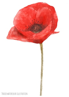 Remembrance poppy by watercolor