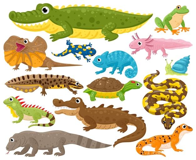 파충류와 양서류. 만화 개구리, 카멜레온, 악어, 도마뱀, 거북이, 야생 동물 벡터 삽화 세트. 뱀, 파충류 및 양서류