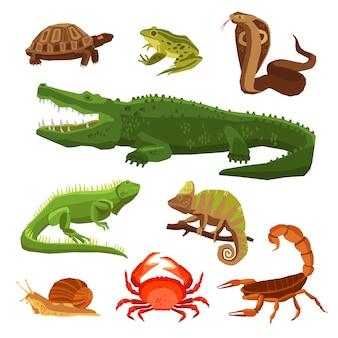 Набор рептилий и амфибий