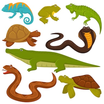 Reptiles and reptilian animals turtle, crocodile or chameleon and lizard snake set