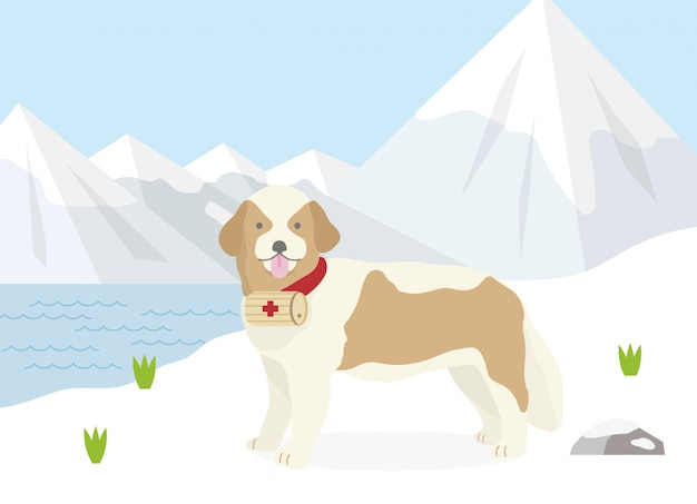 Rescue dog of the alps