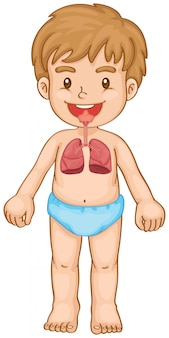 Respiratory system in human boy